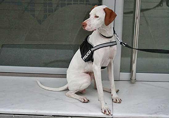 La Policía Local de Algemesí incorpora un perro para detectar y rastrear la presencia de drogas.