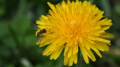 Spring Before the Storm | doomthings