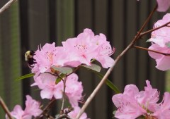 Covered in BEES!