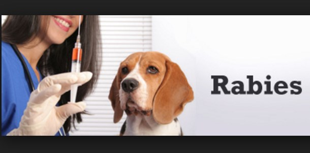what-is-rabies-its-symptoms-treatments-and-prevention