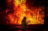 ऑस्ट्रेलिया के जंगलों में आग खतरनाक स्तर पर