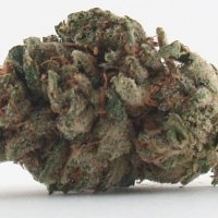 Master's Mistress Kush Chronicle