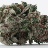 Mountain Man Kush Chronicle