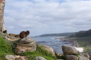 Cabo de Buena Esperanza, energía en el extremo sur de África