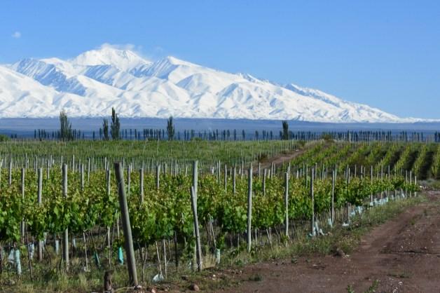 Colosso Wines y Sottano se unen a Alandes y La Coste de los Andes