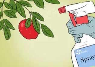 how-to-grow-an-apple-tree-2