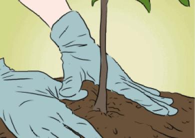 how-to-grow-apple-tree-3