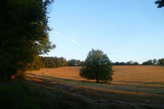 Sunset over fields