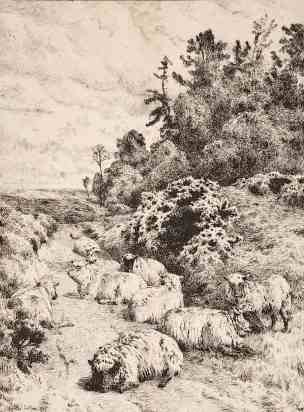 Charles Collins, Sheep