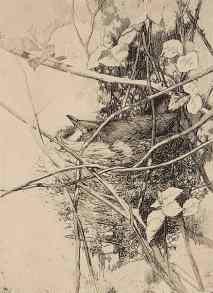 GE Collins, Bird on Nest