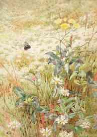 GE Collins, Wild Flowers