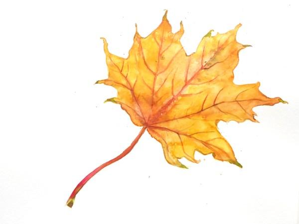 Malen mit Aquarellfarben: Herbstblätter malen | www.dorokaiser.online.de