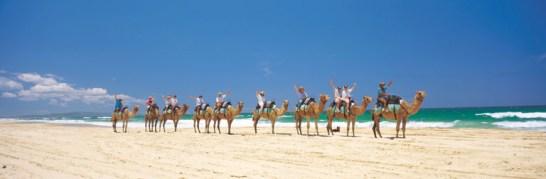 032141 Teewah Camel Riding on Four Mile Beach