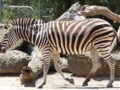 zoo100