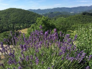 Uitzicht en lavendel