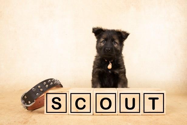 30- Scout, roze