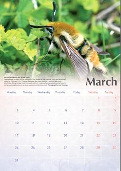 Calendar - March