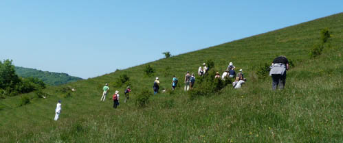 Course attendees spread out across Black Hill near Cerne Abbas