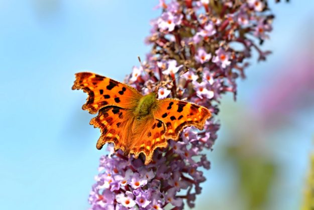 Comma. Photo: Andrew Cooper