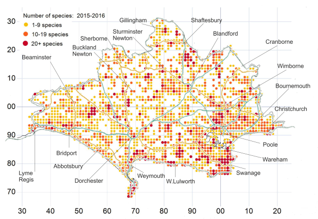 Map of Dorset showing how many species have been recorded in each kilometer square