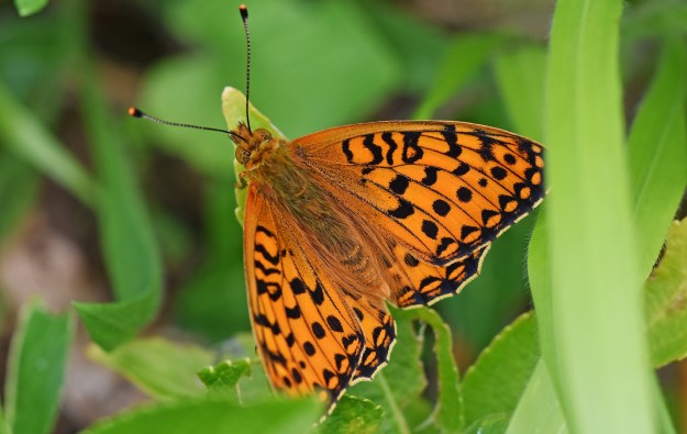 View of butterfly with open wings