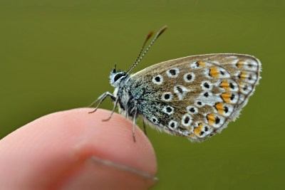 Butterfly perched on a finger, looking very small