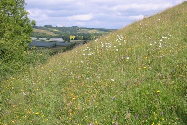 Grassy hillside with lots of wild flowers in bloom