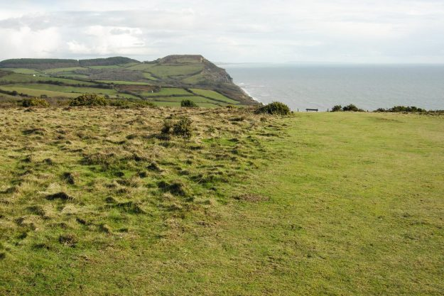 Grassy area leading to a view of the sea