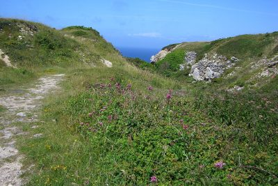 Track leading towards the sea and cliffs