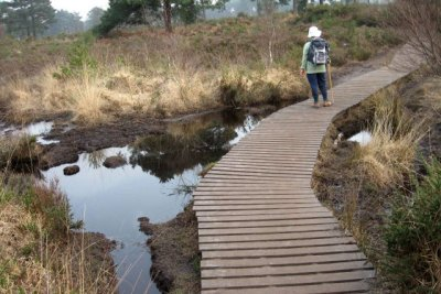 Wet heathland and boardwalk