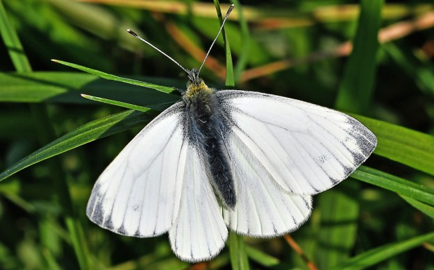 View of a white butterfly resting on a green plant