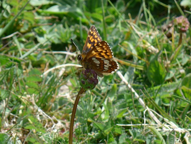 View of a perching brown and orange butterfly