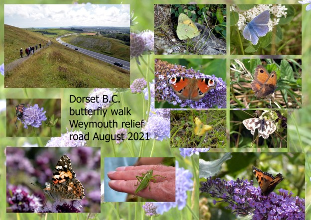 A collection of butterfly photos taken on a BC Guided Walk