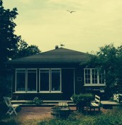 - se hvor dekorativt mågen sidder på taget,
