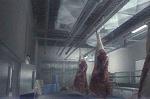 Meat Packing - Team Grün