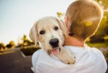 Photo of Božanje psov za sproščanje med izpiti