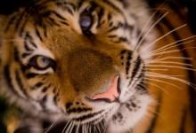 Photo of Bogastvo globalne divjine vse manjše