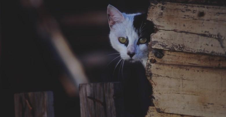 Mačka za vogalom