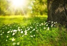 Photo of Z enakonočjem se začenja pomlad