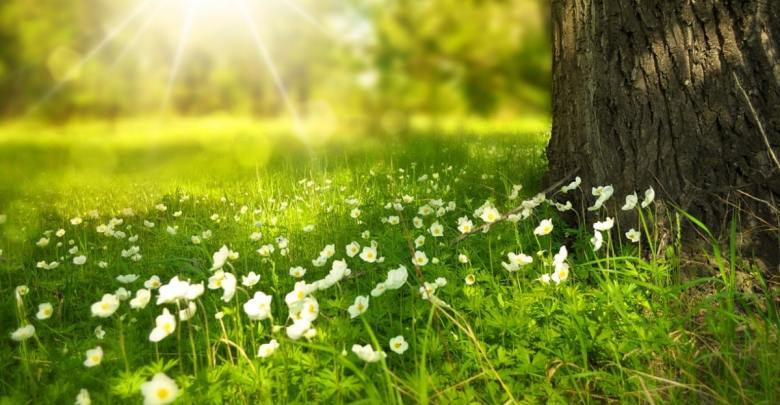 Pomlad na travniku