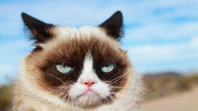Photo of Grumpy Cat je poginila