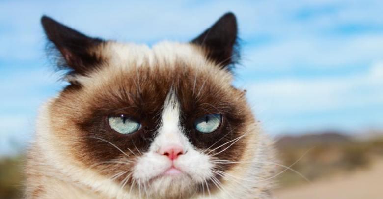 mačka, R.I.P., Grumpy Cat, internet, senzacija,