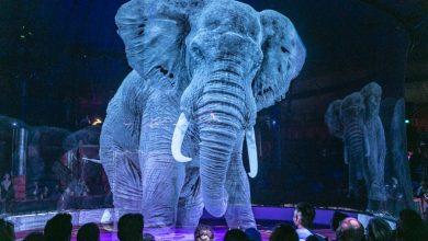 Photo of V cirkusu hologrami namesto pravih živali