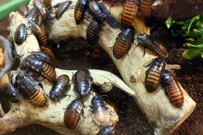 insekticid, žužkoslovje, univerza Purdue, iztrebljanje