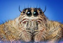 Photo of Živali, ki pri nas sprožijo najhujši strah in gnus