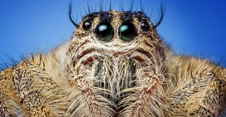 strah, gnus, raziskava, pajek, British Journal of Psychology