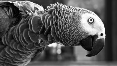 Photo of Odkrili fosil metrskega papagaja velikana