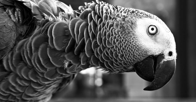 fosil, fosil ogromnega papagaja, papagaj, Nova Zelandija, fosil, Heraklej