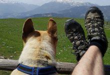 Photo of Svetovni dan varstva živali – 4.oktober