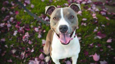 Photo of Kakšen je vpliv psov na zdravje lastnikov?